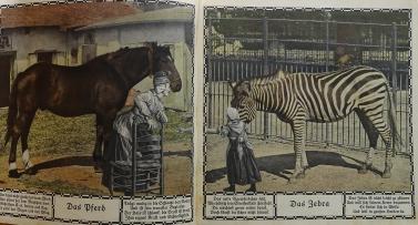 Zoo_Bell (33 von 49)